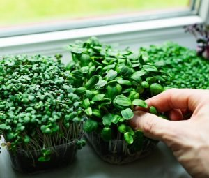 Jump On The Terrace Gardening Trend And Grow Your Own Food