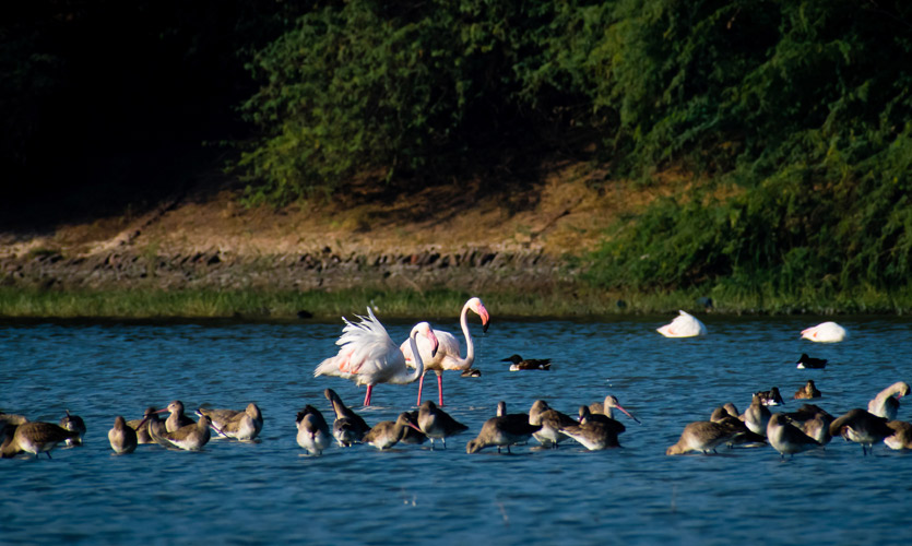 Walking Along Thol Lake: What Local Tourism Looks Like During A Pandemic