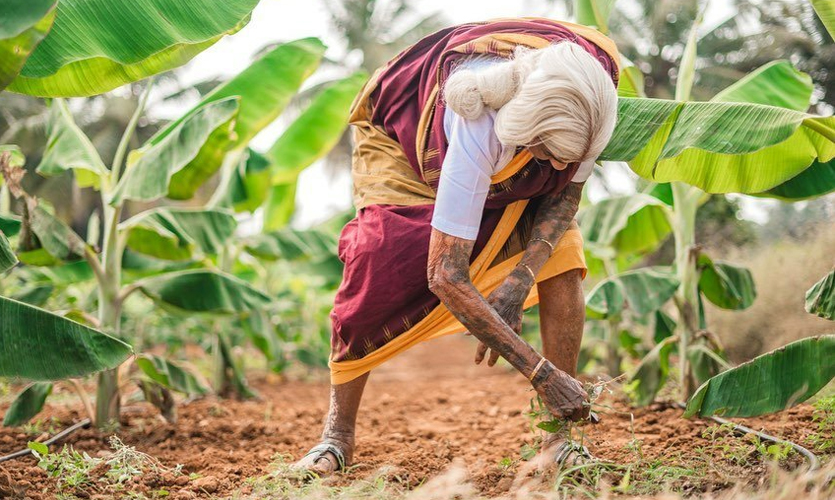 Pappammal received a Padma Shri for her contribution towards the agriculture industry; and also for organising women in agricultural extension programmes.