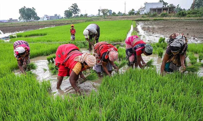 Monsoon Dip To Shift Farming Economy: CRISIL Report