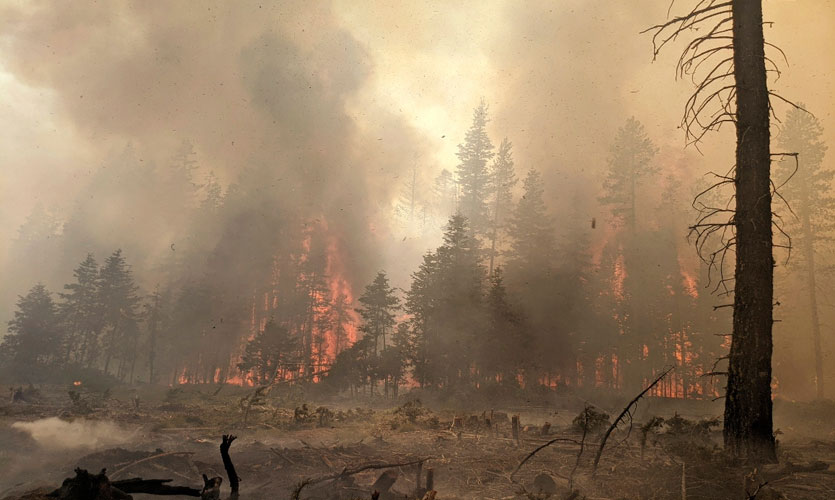 Wildfires Present An Urgent Need For An Efficient Corporate Carbon Offsets System Policies